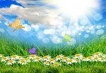 Spring (4).jpg