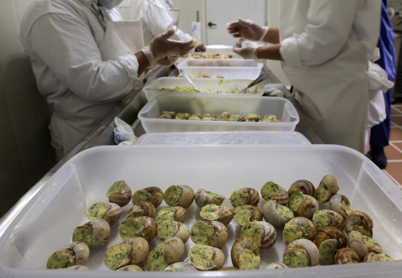 Workers prepare the meat of snails (Helix Aspersa), cooked and packed in their shells in a farm near Choachi