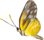 NLD Addon Butterfly.png