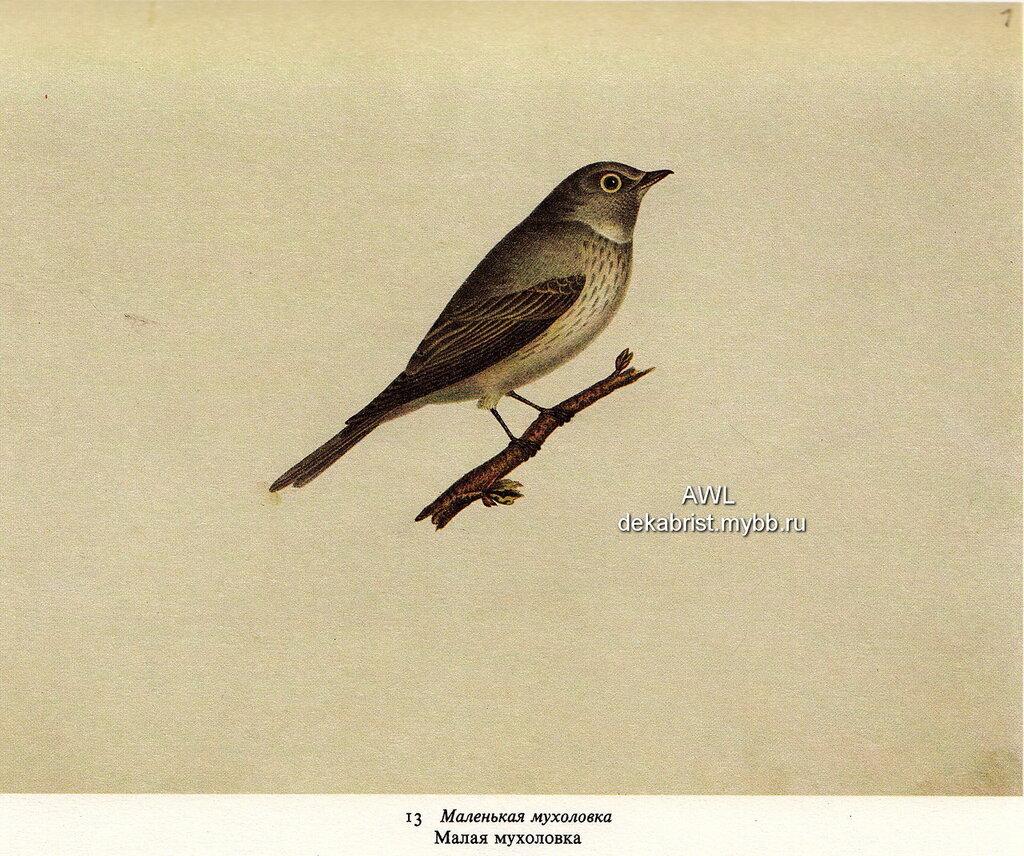http://img-fotki.yandex.ru/get/9063/19735401.da/0_7dda7_bf9add86_XXL.jpg