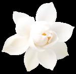 EenasCreation_Floral_notes_el5.png