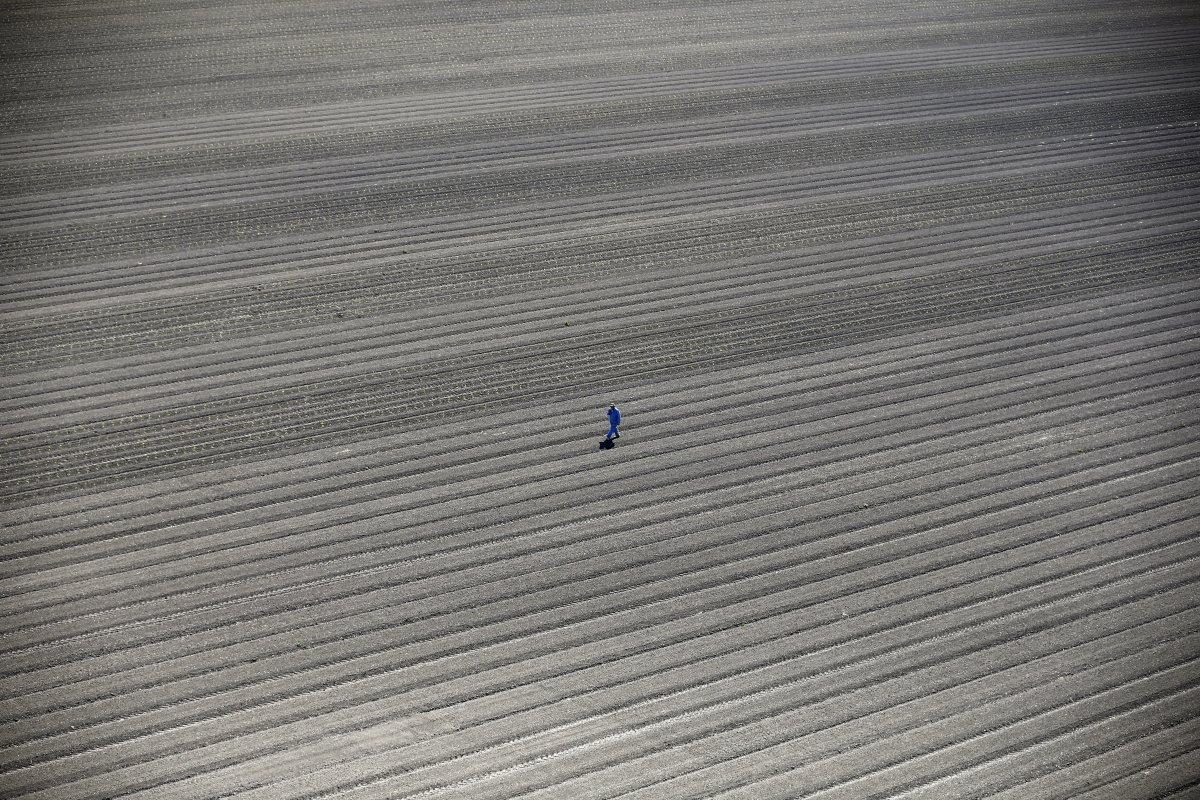 14. Фермер идет по высохшим полям в Лос-Баносе — местности долины Сан-Хоакин между Санта-Круз и Мерс