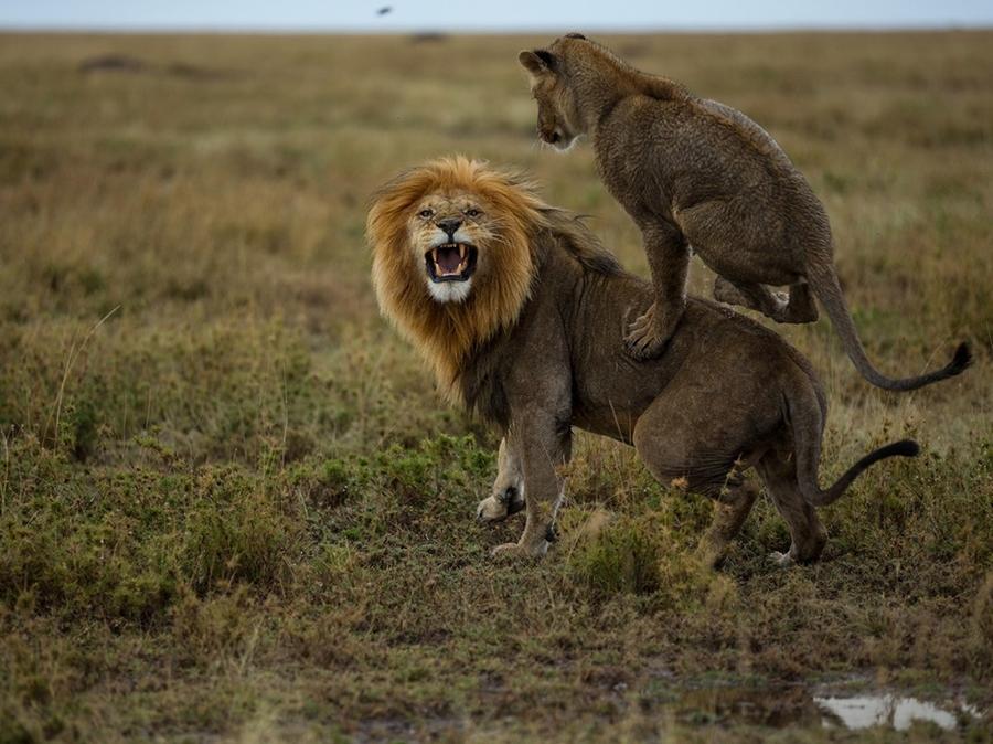 Лучшие фотографии за ноябрь от National Geographic Россия (2013)