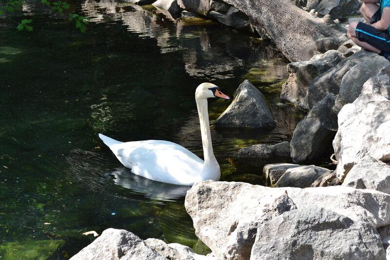 озера с лебедями - Воронцовский парк