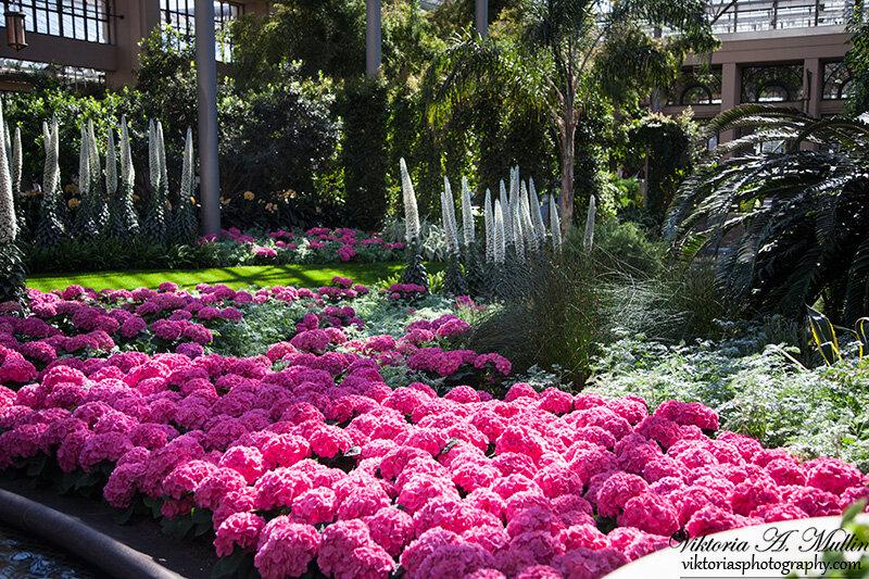 Longwood Gardens Сады Дюпона!