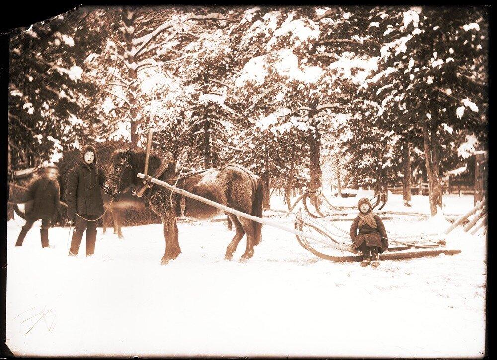 1913. Село Ларьяк.  Запряженная в сани лошадь