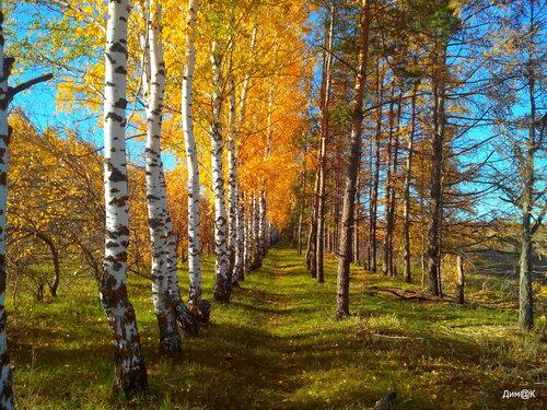 Осенний лес (увеличенная насыщенность)
