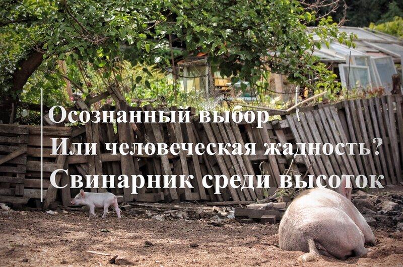 Свинарник среди высоток Киева. Осознанный выбор или человеческая жадность?