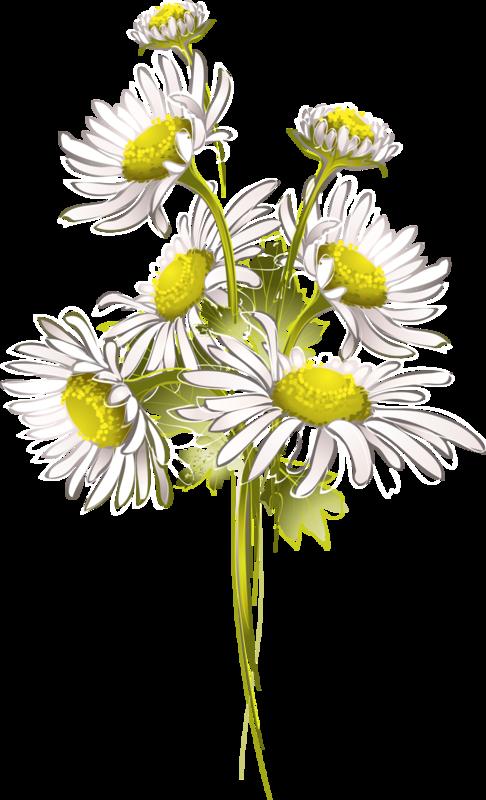 цветы (33).png