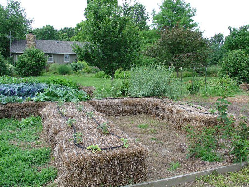 Огород на соломе