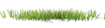 Bush and Grass  (137).png