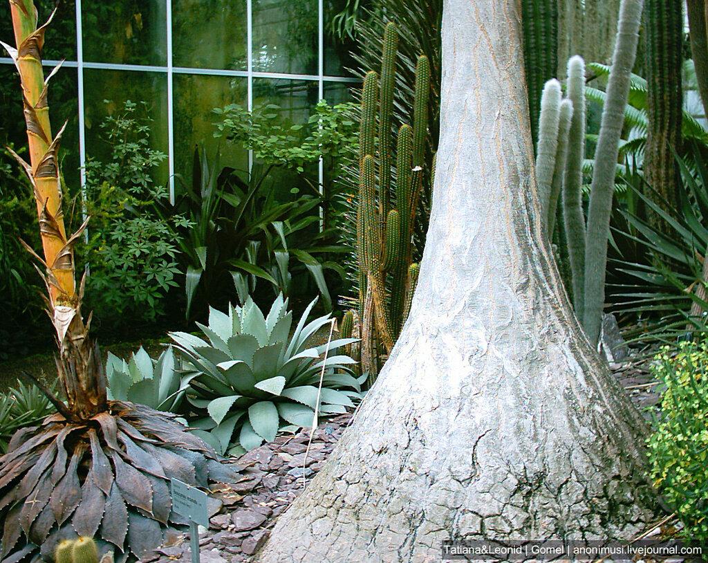 Тропические растения в Швейцарии.