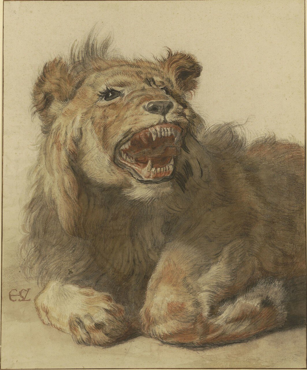 A Lion Snarling
