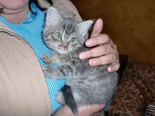 Изуродованный котенок Мышкин