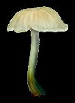 ldavi-paintersfaeries-mushroom5.png