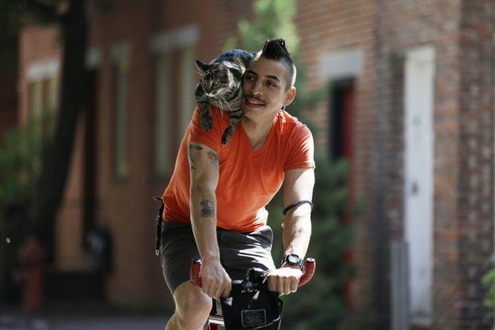 Кот на плече фото 3
