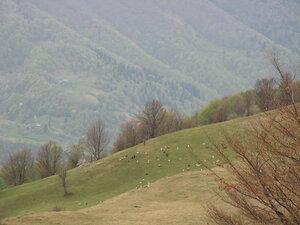 Карпаты 2010 (68).jpg