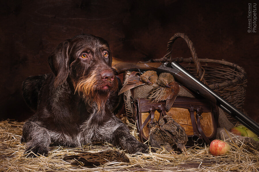 Фото картинки на тему охота