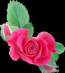 NLD Rose 2.png