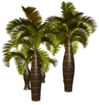 Palms  (30).png