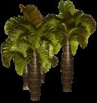 Palms  (30).png
