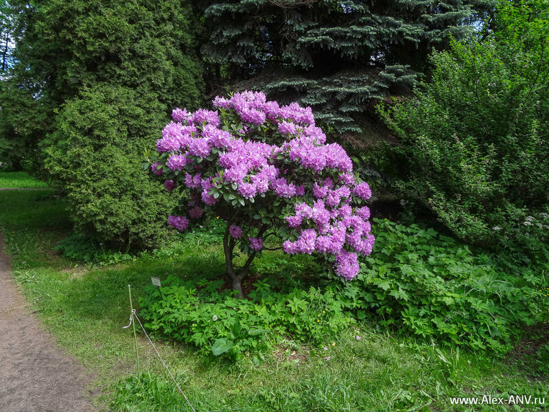 Некоторые кусты сплошь усыпаны цветами