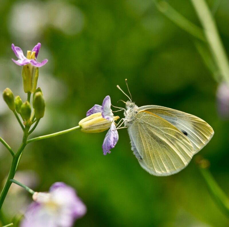 Крылья весны