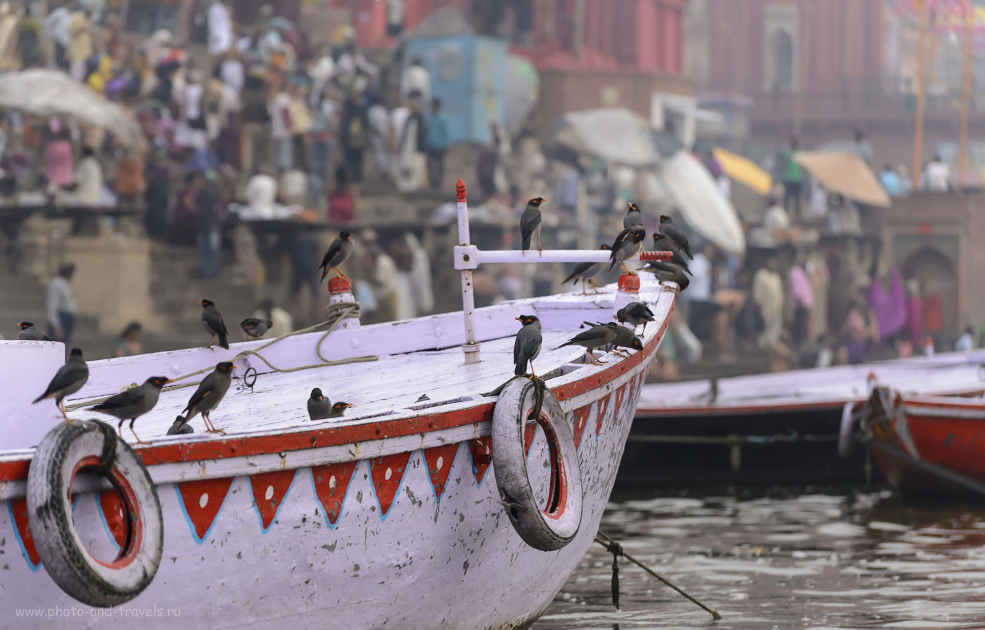 Фото 19. Скворцы Майна на лодке в Варанаси. Тур в Индию самостоятельно. 1/500, 4.8, 1250, 140.