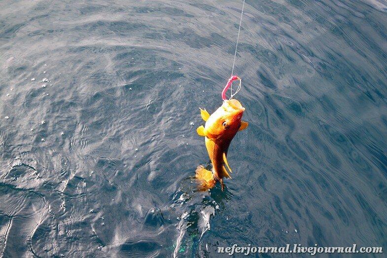 ледовитый океан рыбалка видео