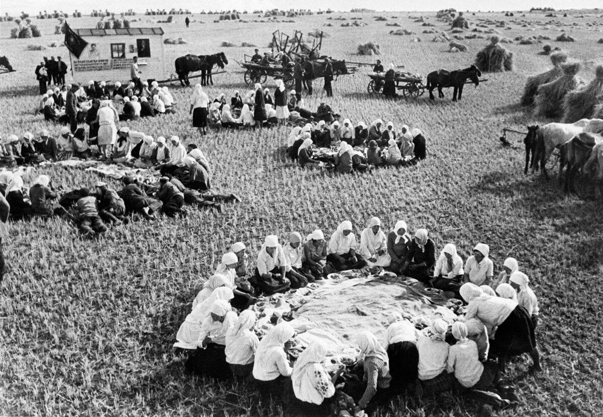 1936. 8 июня.Обед в полях во время сбора урожая в колхозе «Путь Ильича» в селе Ольшанка, Шашковского района Киевской области.
