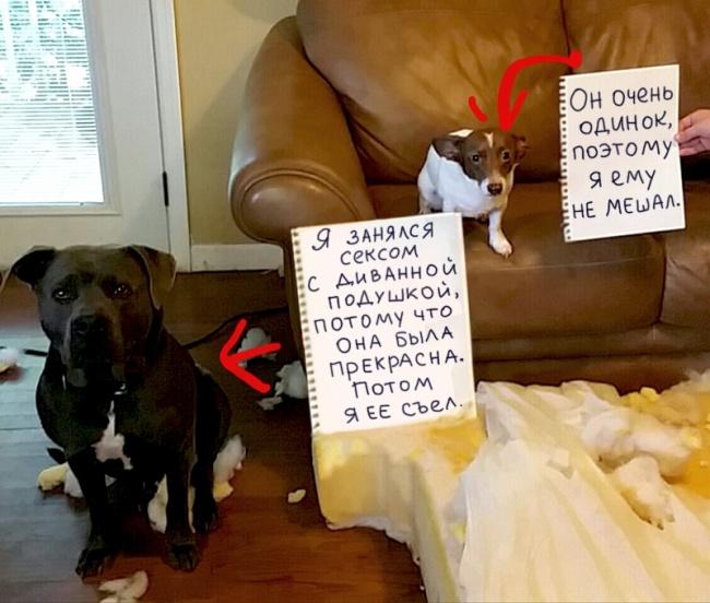 Наверное эти собаки, так больше не будут