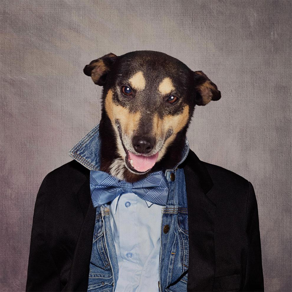Нарядные собачки ищут хозяев: фотограф из Арканзаса Тэмми Суарек (Tammy Swarek) (10 фото)