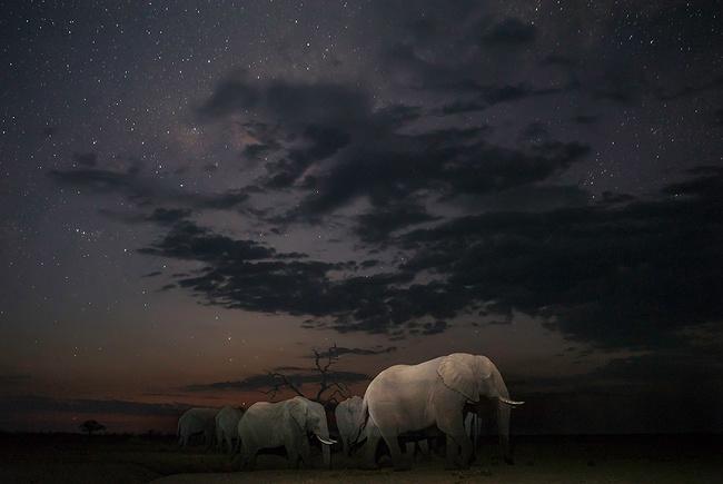 лучшие фотографии планета Земля Фотография фотограф лучшее работа работы конкурсы