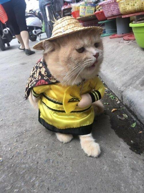 Кот - продавец рыбы