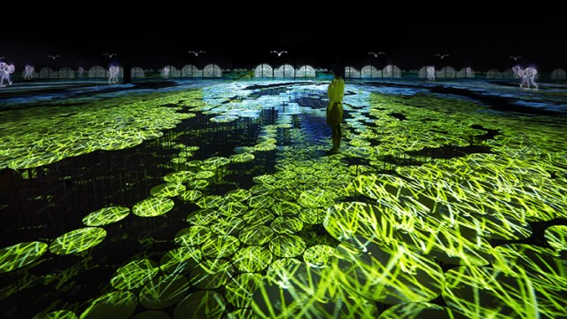 Interactive Mapping Installation of Rice Fields