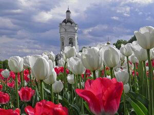 В мире тюльпанов