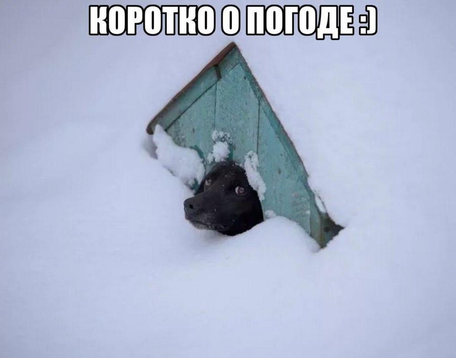 Подборка интересных и веселых картинок 25.02.18