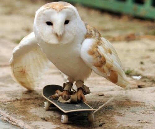 owls17.jpg
