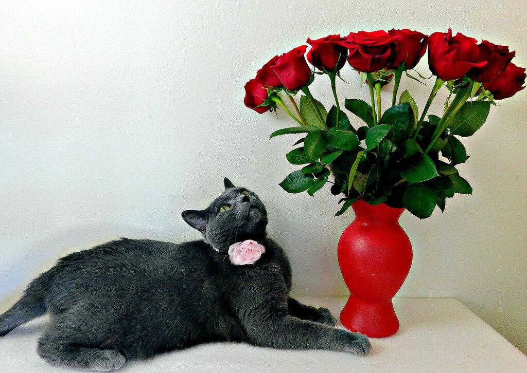 Элвис и розы
