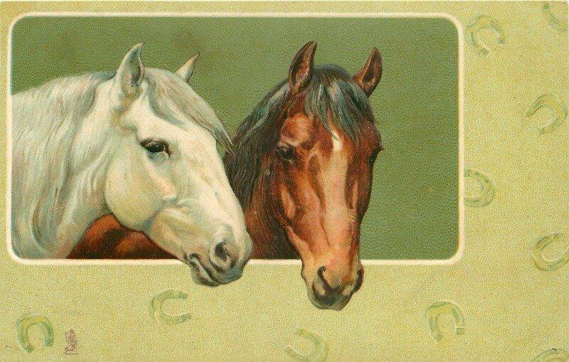 Картинки для, лошади открытка