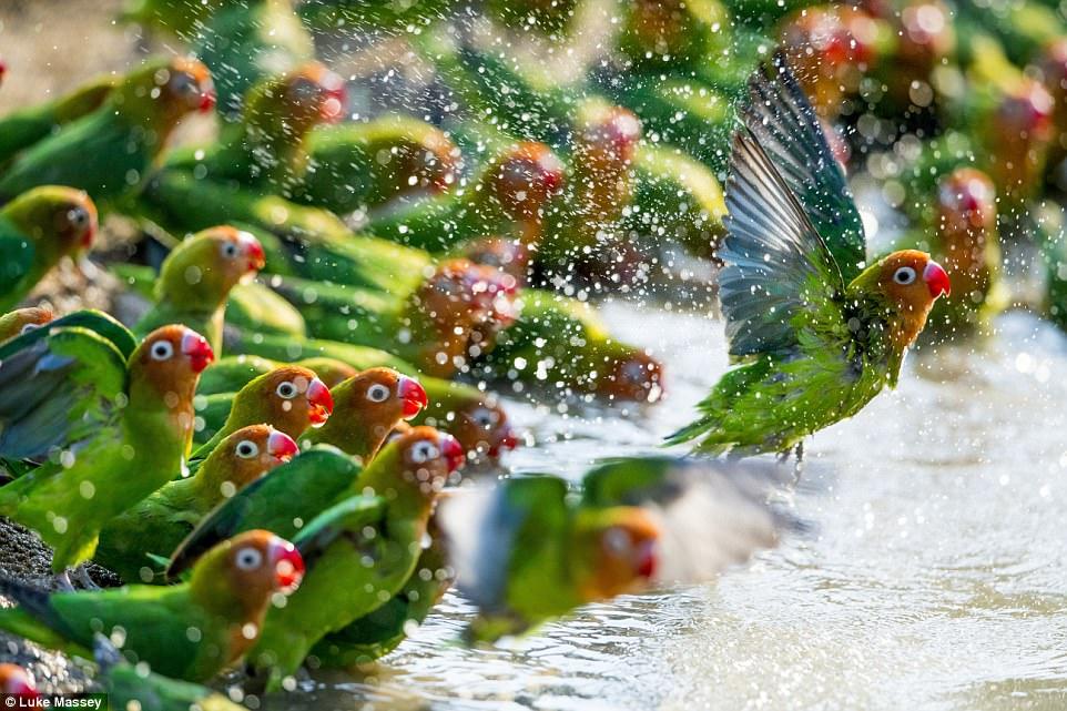 Самое трогательное фото из лучших работ конкурса Wildlife Photographer of the Year (21 фото)