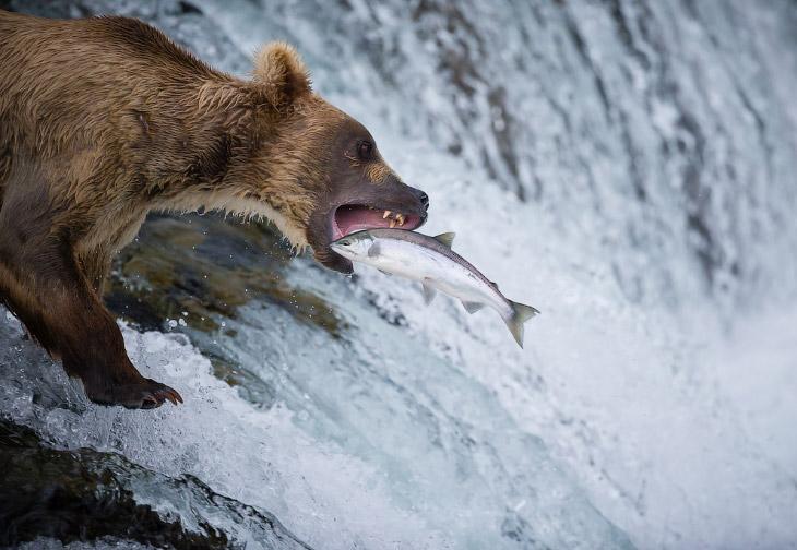 В мире самое интересное животные Фотография фотограф интересное мир