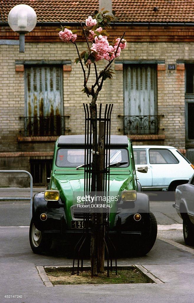 1984. Citroen 2CV, припаркованный перед цветущим деревом