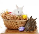easter rabbit and easter eggs still life