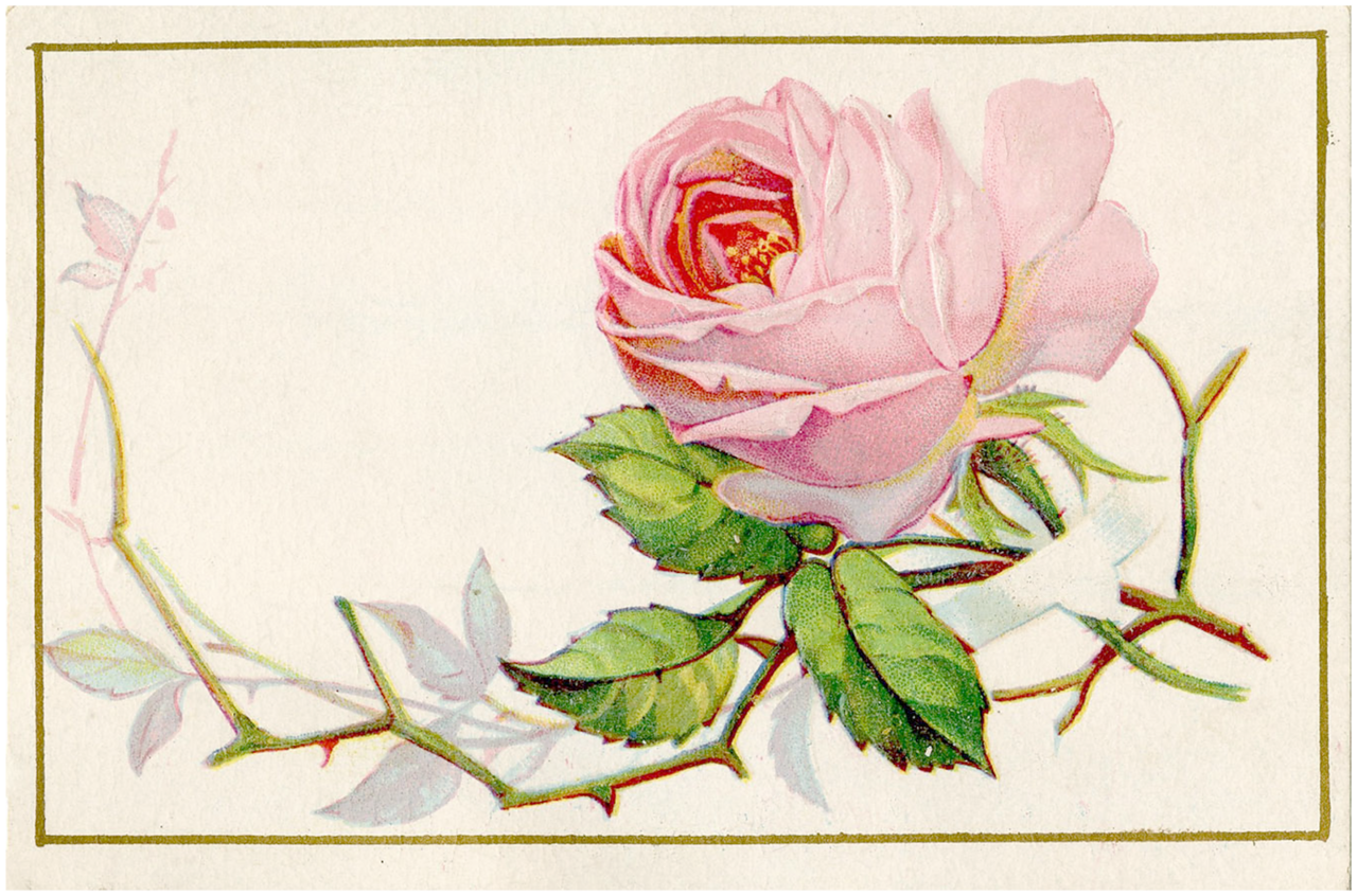 Старинная открытка розы, международным
