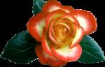 Holliewood_RoseIsARose_Rose15.png