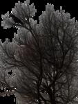 raven_by_peroni68-d39h1vm.png