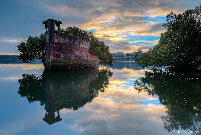 Плавучий лес в Сиднее