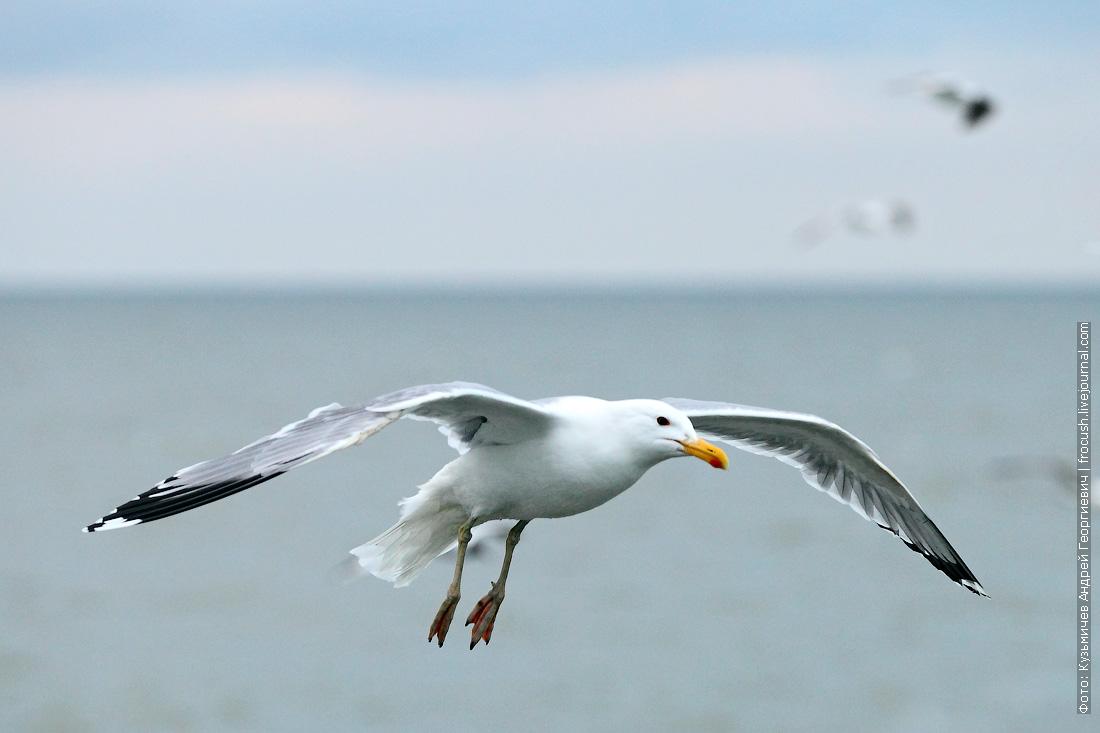 круиз на теплоходе Русь Великая по Азовскому морю