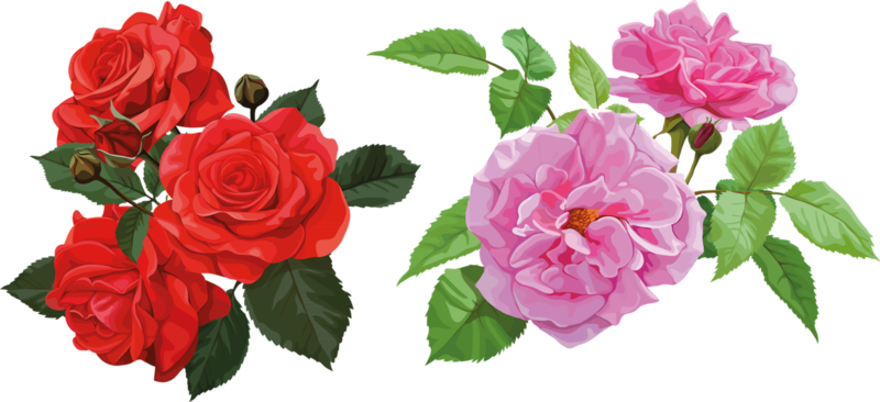 bouquet_of_pink_roses (8).png